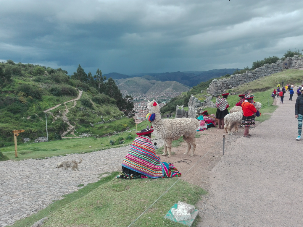 Alpaca in Cuzco South America
