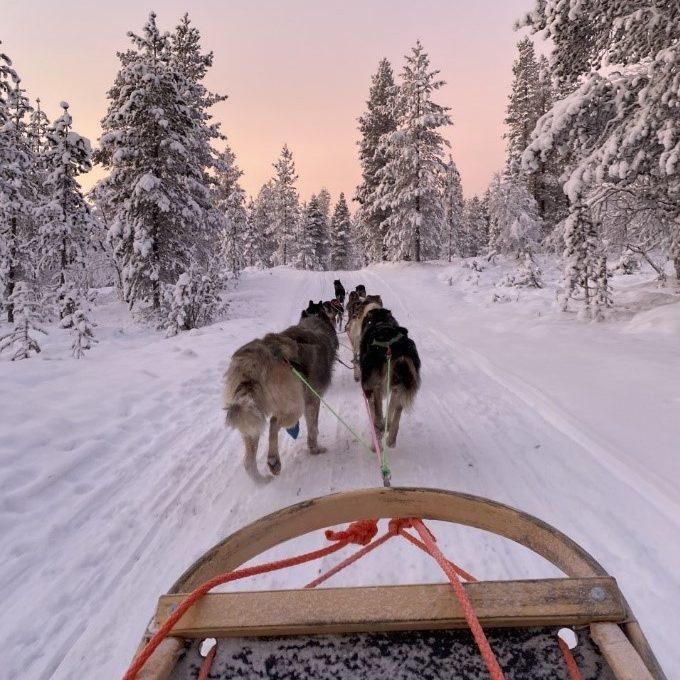A husky sleigh ride